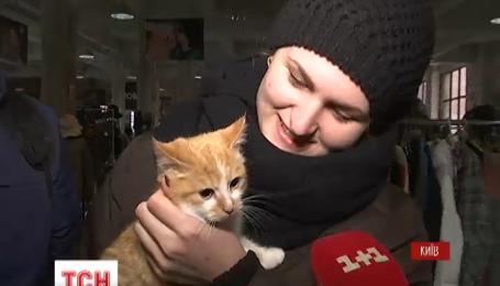 У столиці влаштували ярмарок котів