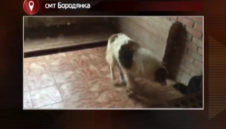 Кто превратил в камеру пыток главный собачий приют страны