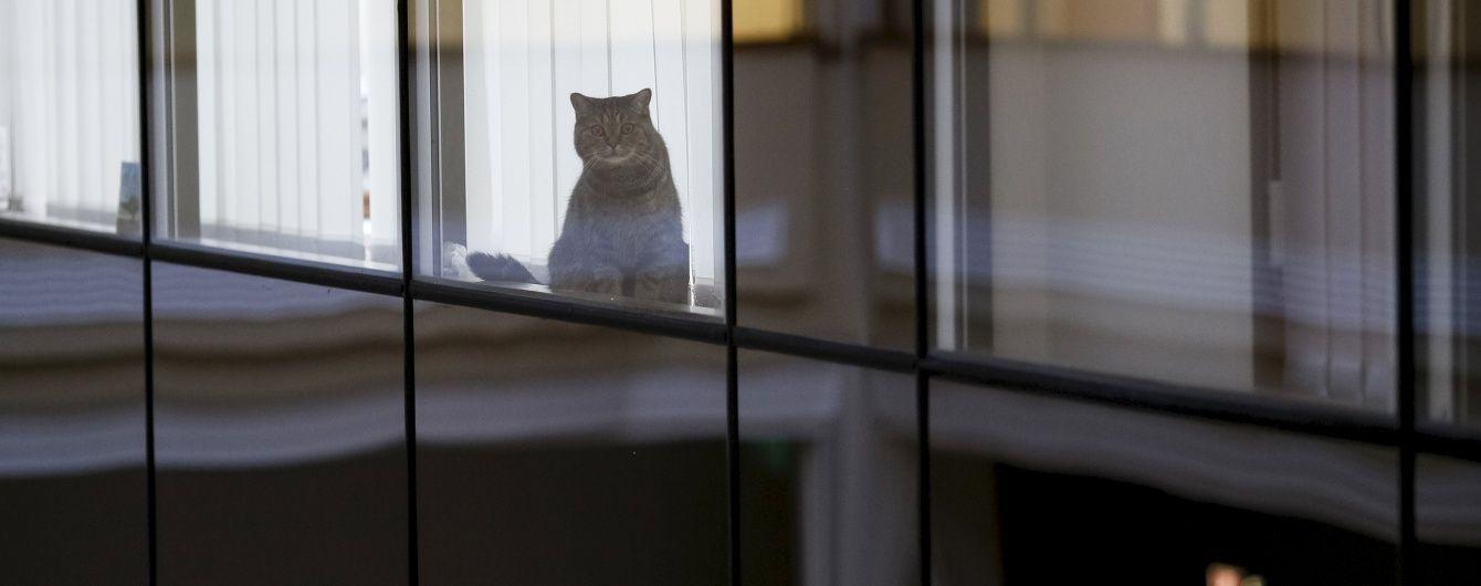 В РФ хочуть штрафувати за позбавлення їжі котів