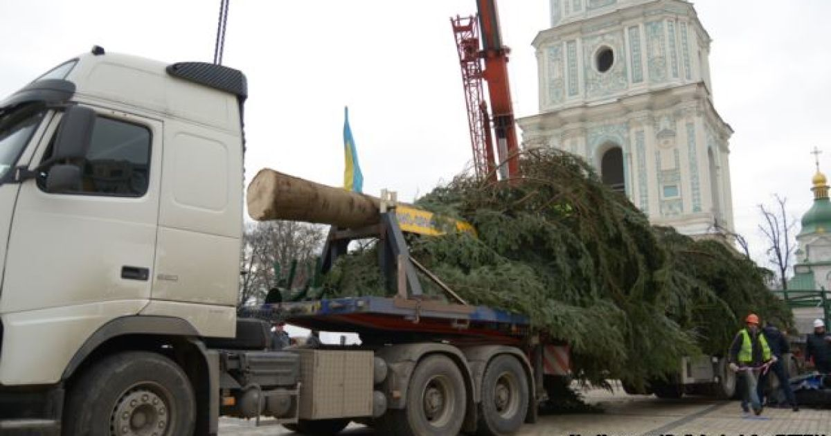 В столицу приехала главная елка страны