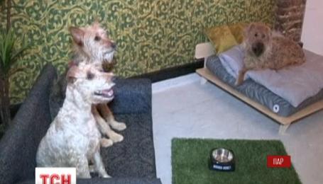В Кейптауне открыли отель для собак