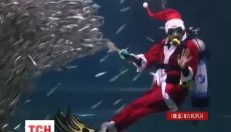 Подводный Санта-Клаус радовал рыб и зрителей в аквариуме Сеула