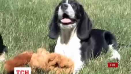 В США показали первых в мире щенков из пробирки