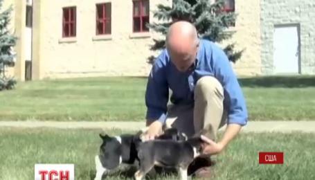 В Соединенных Штатах показали первых в мире щенков из пробирки