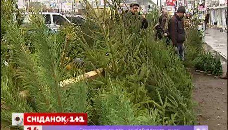 По всей Украине массово открывают елочные базары