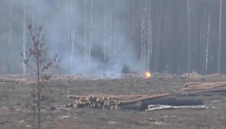 Матери Савченко предложили земельный участок в Быковнянском лесу