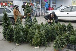 В Україні стартував продаж ялинок: де та за скільки придбати легальну новорічну красуню