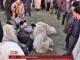 Тисячі румунських пастухів прорвалися до парламенту