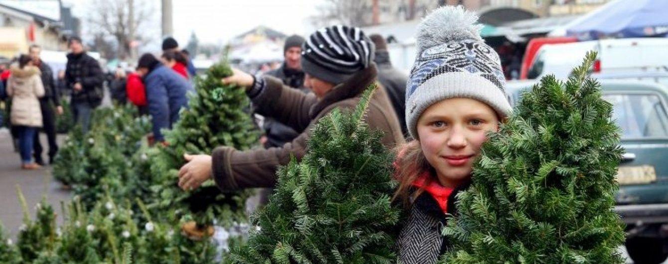 """Економічні новини 16 грудня: святкові потяги Україною та карта """"живих"""" ялинок"""