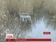 Тіло громадянина Туреччини виловили в річці Інгул у Миколаєві