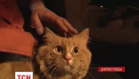 У Дніпропетровську пожежники врятували кота