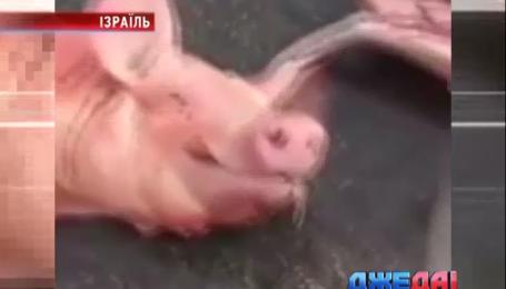 На жителей Тель-Авива обрушилось несколько тонн отборной свинины
