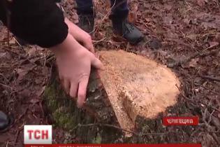 Дубова лихоманка: на Чернігівщині браконьєри зухвало вирубували дерева просто на очах у судді