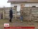 Переселенці з Донбасу організували ферму у Київській області