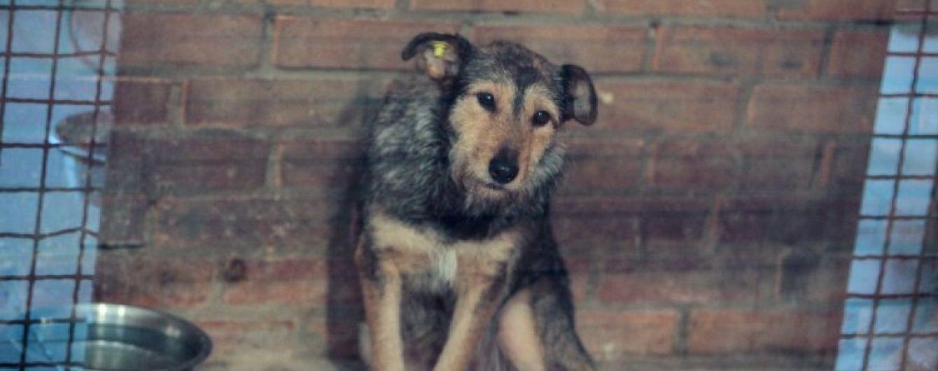 Кривавий вбивця собаки в Ужгороді лишився на волі після вироку і знову знущається над тваринами