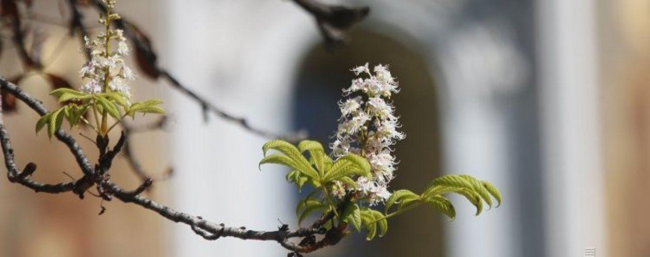Понедельник в Украине будет теплым и солнечным. Прогноз погоды на 15 мая