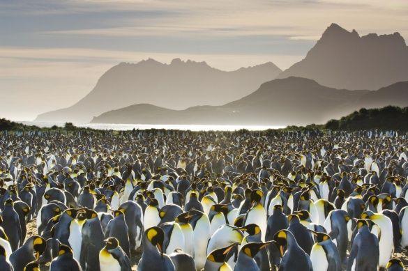 подорож, пінгвіни, атлантика