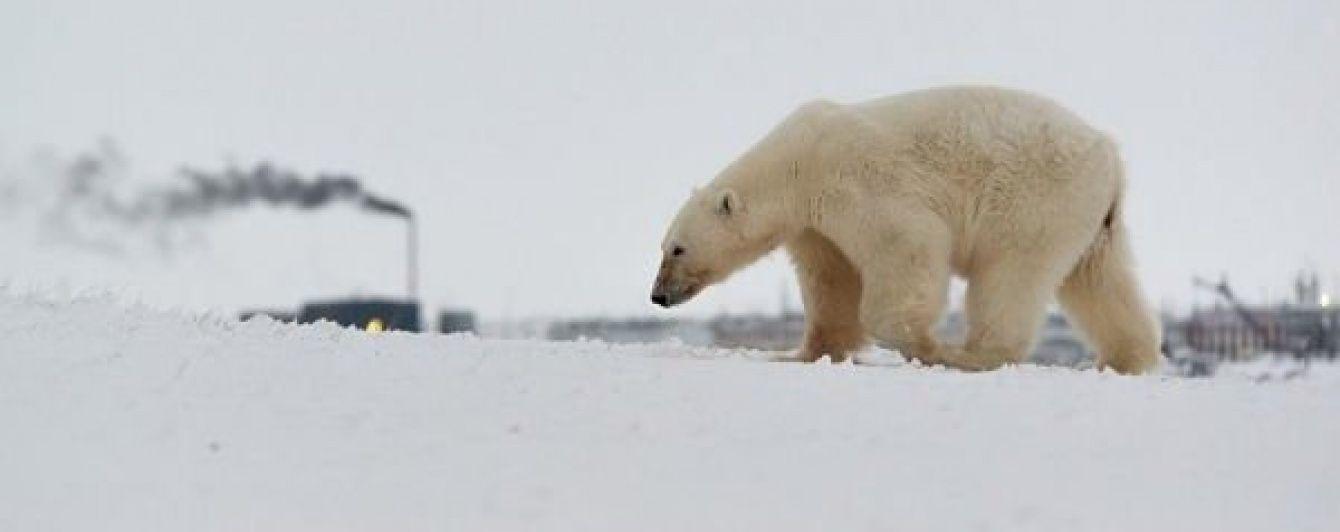 У WWF назвали вбивство білої ведмедиці в Арктиці садизмом