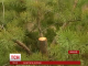 """У Миколаєві на захист лісу від ялинкових браконьєрів вийшли бійці цивільного корпусу """"Азов"""""""