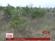 """У Миколаєві бійці цивільного корпусу """"Азов"""" будуть захищати ліс від ялинкових браконьєрів"""