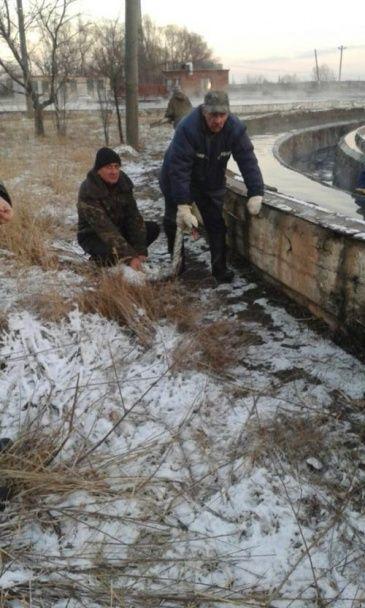На Полтавщині врятували з Ворскли собаку, а у Львові з очисних споруд – лебедя