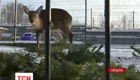 Непродані ялинки зміцнять імунітет мешканців Межигірського зоопарку