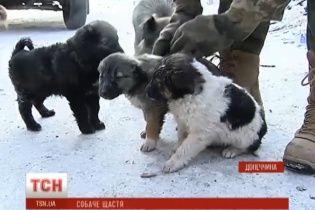 Цуценята вбитої бойовиками в зоні АТО собаки знайшли собі господарів після сюжету ТСН