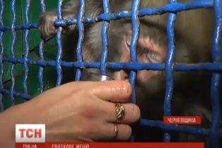 """У зоопарку на Чернігівщині мавпи на свята """"причащалися"""" вином і закушували заливною рибою"""