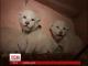 У приватному зоопарку під Києвом народилися білі левенята