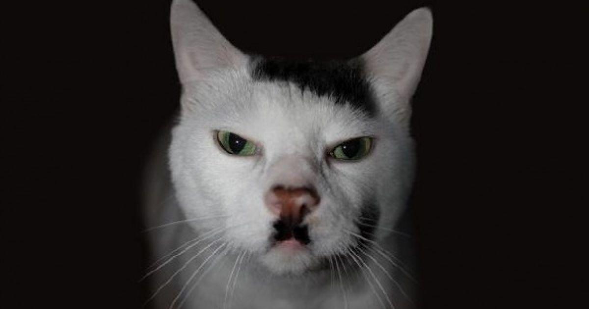 Cat fur markings