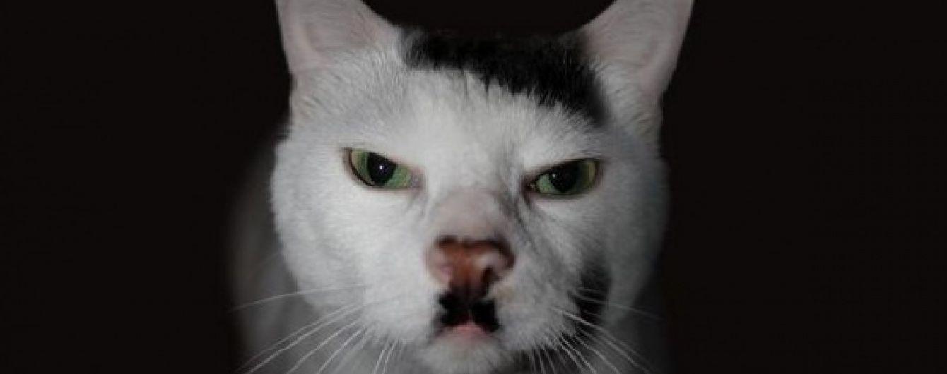 Стала известна причина рождения похожих на Гитлера котов