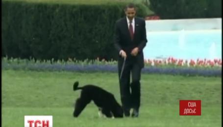 В США злоумышленник пытался украсть собаку Обамы