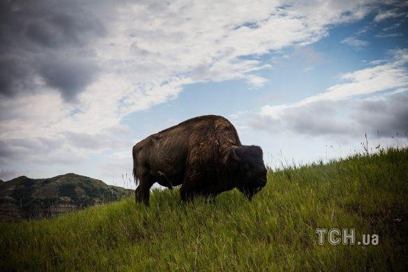 Національний парк Теодора Рузвельта в Північній Дакоті