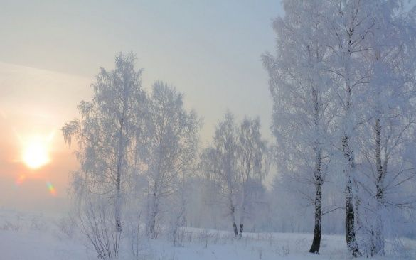 Берези, зима