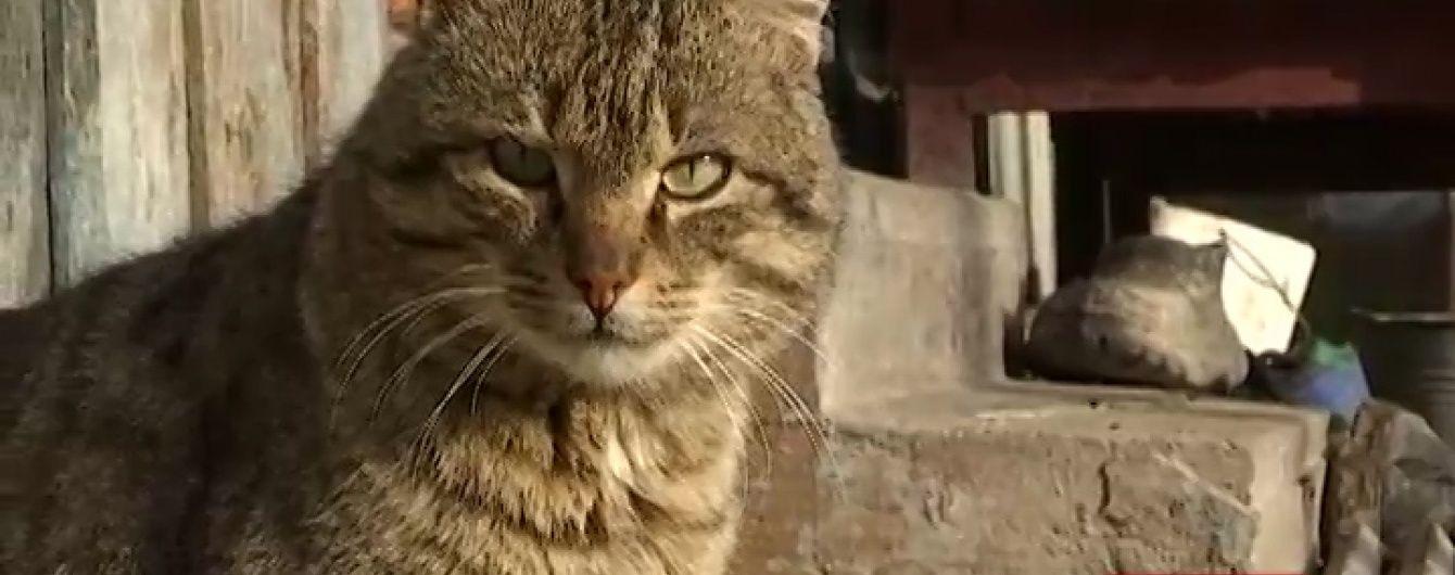 Скажений кіт жорстоко покусав людей на Львівщині