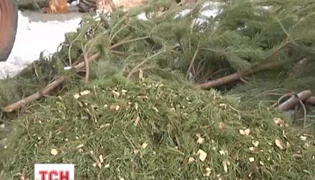 В столичной мэрии решили сделать из праздничных елок удобрения для новых лесов