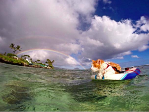 Юзерів потішив одноокий кіт-серфер, який насолоджується життям і розсікає хвилі
