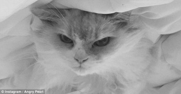 Сердитий кіт із магічним поглядом став новою зіркою соцмереж