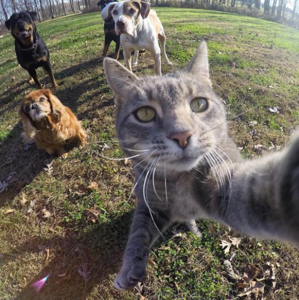 Юзерів шалено потішив кіт-майстер селфі