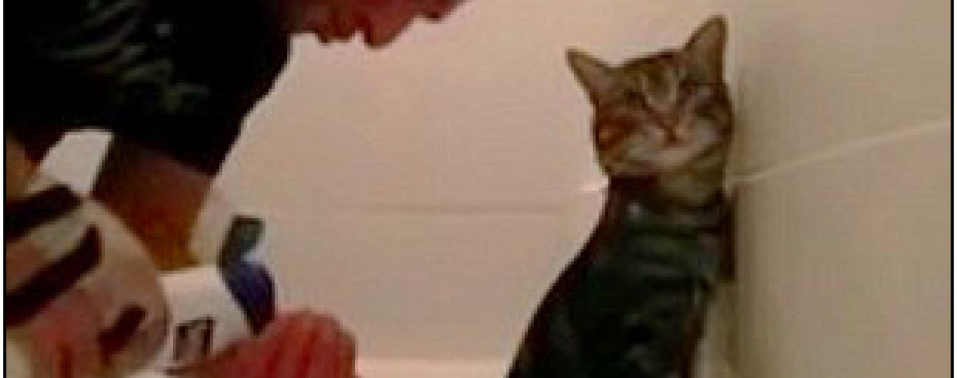 """Юзерів насмішив """"мусульманський"""" кіт, який мужньо купається"""