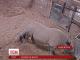 Народження маленького носорога зафільмували у британському зоопарку