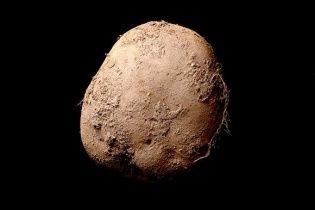 Відчайдушний бізнесмен придбав фото картоплини за мільйон євро