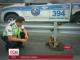 Мережу зворушили фото еквадорського лінивця, що застряг посеред жвавої траси