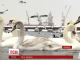 На Одещині на понтонній переправі зимує колонія лебедів, качок, гусей та чайок