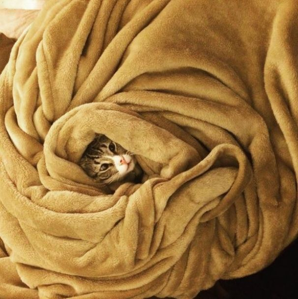 Миле косооке кошеня розчулило юзерів своїм стурбованим поглядом
