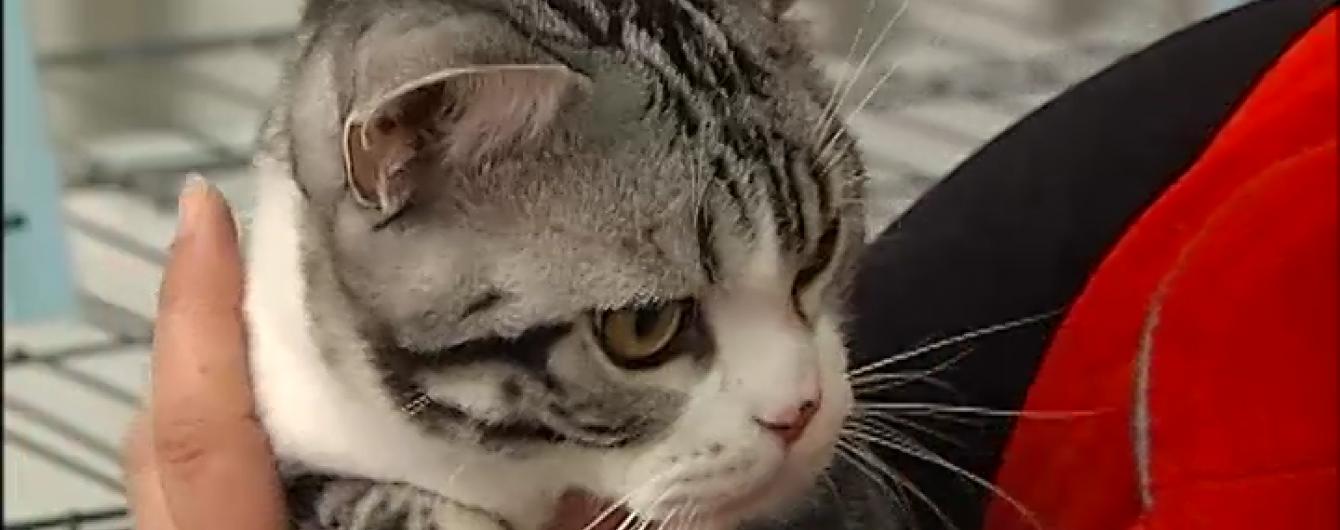 У Києві відбувається чемпіонат котячої краси