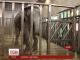 У Харкові доглядач зоопарку зміг пробачити слонисі, яка позбавила його руки
