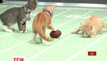 У США проведуть змагання з футболу для кошенят