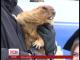 На Харківщині сьогодні розбудили байбака, щоб дізнатися, чи довго триватиме зима