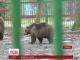 Ведмідь напророкував румунам швидкий кінець зими